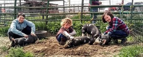 Children and pigs